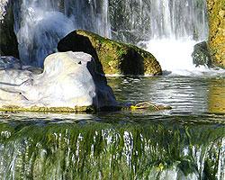 Parque japon s o jard n del coraz n la serena paseos y for Jardin japones horarios